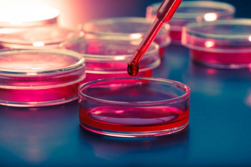 Kök Hücre Tipleri Nelerdir?