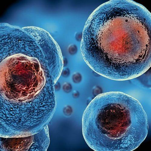 Kök Hücre Nedir?