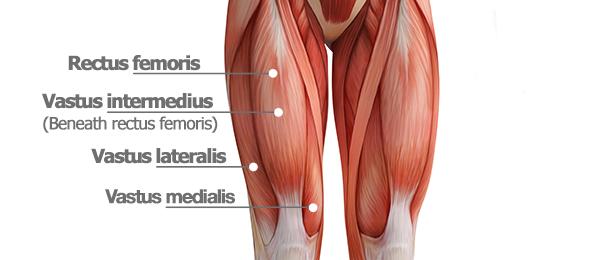 Kuadriseps zayıflığı hemen her zaman diz ağrısına sebep olmaktadır
